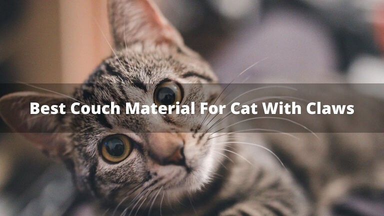 Best Couch Material For Cats With Claws
